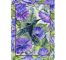 Morning's Glory Photographic Print