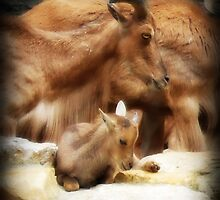 Mom with her baby by Sherri Fink