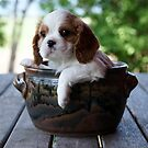 Potted Puppy (6) by Tanya Rossi