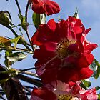 Red Flowers Against the Sky by Joanne Rawson