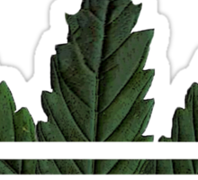 Marihuana logo Sticker