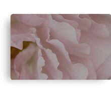 ~ blush Rose blush ~ Canvas Print