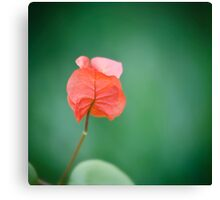 Red on Green Canvas Print