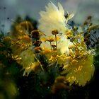 Glory in the Sun by Lozzar Flowers & Art
