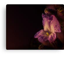 Lavender Flower  Canvas Print