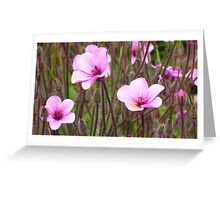 Pink Flowers in my Garden Greeting Card