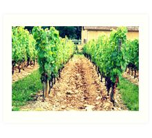 A French Vineyard Art Print