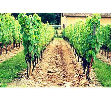 A French Vineyard Photographic Print