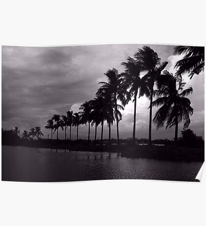 Coconut trees Poster