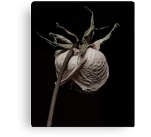 Faded Yellow Rose Canvas Print