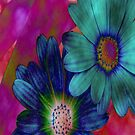 Daisies  by M.S. Photography/Art