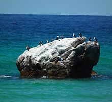 Cormorants Castle by CPlayle