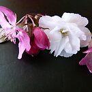 Spring Selection by DEB CAMERON