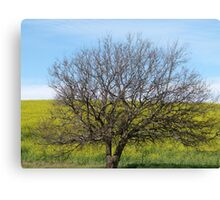 Gold and Tree Canvas Print