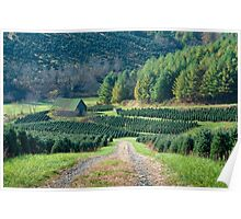 Surrounded by Christmas Trees Poster