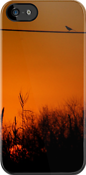 Morning Bird iPhone Case by Denis Marsili