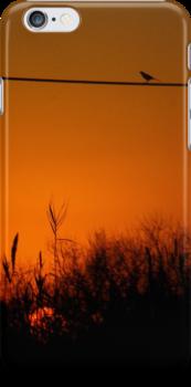 Morning Bird iPhone Case by Denis Marsili - DDTK