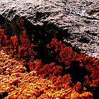 """""""lichen"""" sun'n'shadow by timoteo"""