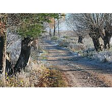 First frost in rural pathway Photographic Print
