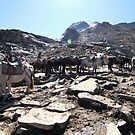 Horses on a rocky mountain by debjyotinayak