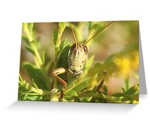 grasshopper up close Greeting Card