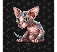 Cataclysm - Sphynx Kitten - Sphinx and Pyramids Photographic Print