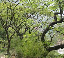 TREES by Shai Biran