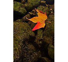 Fall in Oak Creek Canyon Photographic Print