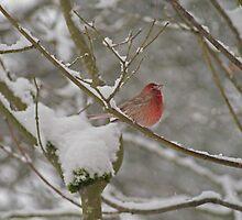 Winter Finch by Debbie Stika