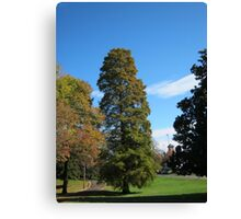 Fall 2011  5, To Tall Canvas Print