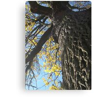 Fall 2011, Time Canvas Print
