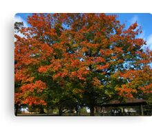 Fall 2011, In & Out Canvas Print