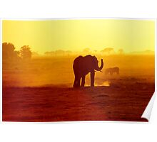 Lone African Elephant By Sunset Poster