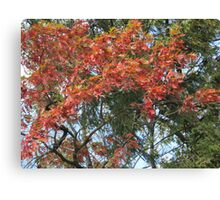 Fall 2011, Leftovers Canvas Print