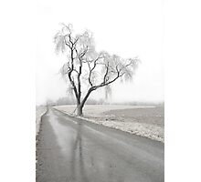 Ice Covered Tree Photographic Print
