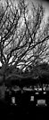 Oak ... at Miami Cemetery by njordphoto