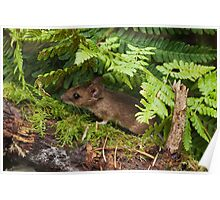 Woodmouse in the Undergrowth Poster