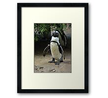 What's A Penguin To Do Framed Print