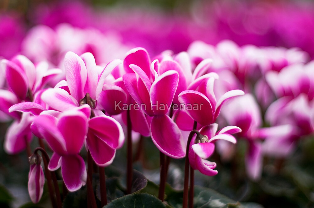 Pink!!! by Karen Havenaar