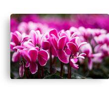 Pink!!! Canvas Print