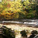 Richmond Falls by Laura Jane Robinson