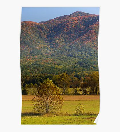 Brothers - Cades Cove, Great Smoky Mountains NP Poster