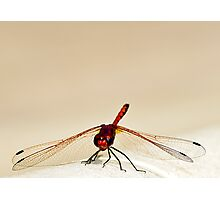 Red Damsel Photographic Print