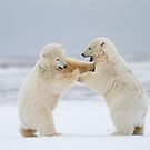 Rock &#x27;Em, Sock &#x27;Em Polar Bears by Gina Ruttle  (Whalegeek)