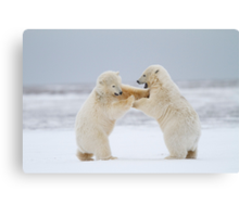 Rock 'Em, Sock 'Em Polar Bears Canvas Print