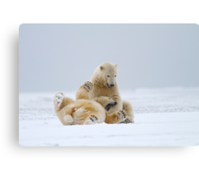 Playtime For Polar Bears Canvas Print