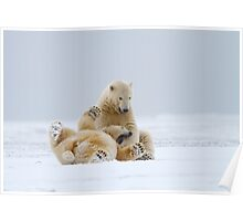 Playtime For Polar Bears Poster