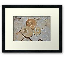 Swirls & Shells (Gomti Chakras)  Framed Print