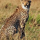 Cheetah iPhone cover by Brad Francis