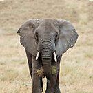 Serengeti Elephant iPhone cover by Brad Francis